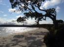 Leaning Beach Tree. Bruny Island, Tasmania